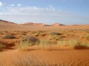 Sahara[1]